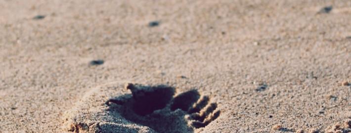 Voetstappen in het zand-unsplash